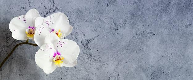 Flores de orquídeas en una rama contra una pared de estuco, maqueta