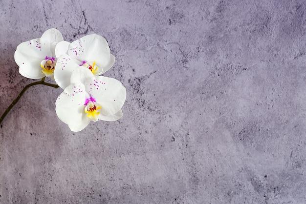 Flores de orquídeas en una rama contra una pared de estuco