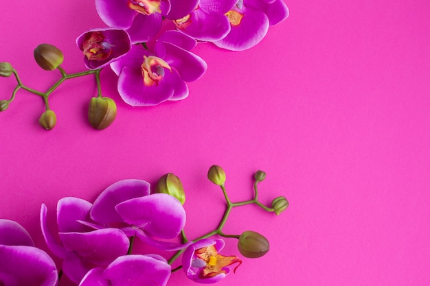 Flores de orquídeas sobre un fondo de espacio de copia violeta