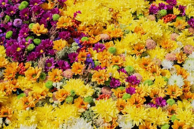 Flores otoñales una alfombra de flores de colores.