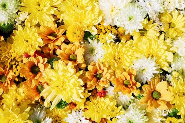 Flores otoñales amarillas.
