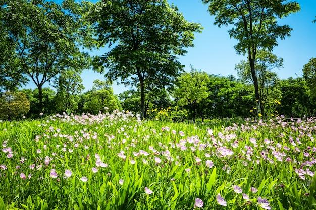Flores en el parque