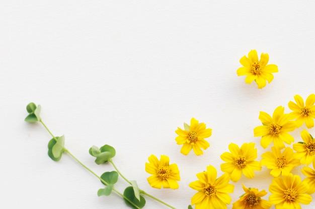 Flores - patrón sobre fondo blanco.