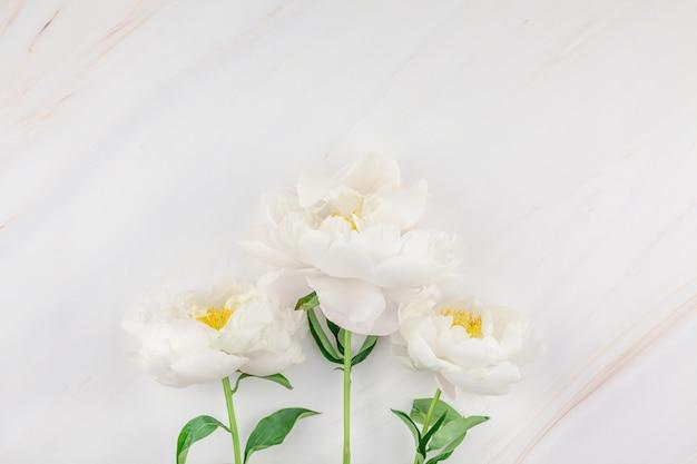 Flores de peonía blanca sobre fondo de mármol