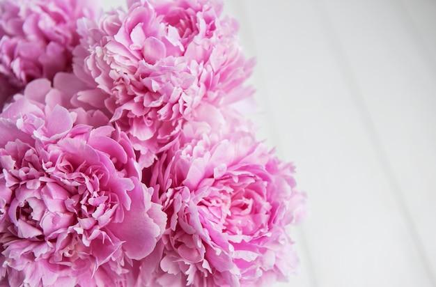Flores de peonía rosa belleza