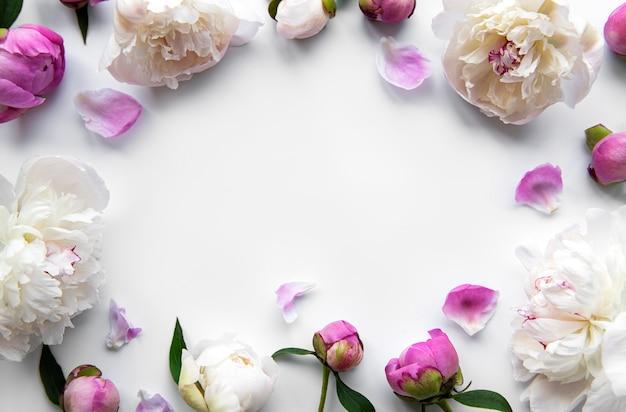 Flores de peonía rosa fresca frontera con espacio de copia sobre fondo blanco, endecha plana.