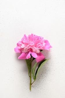 Flores de peonía rosa sobre un fondo blanco.