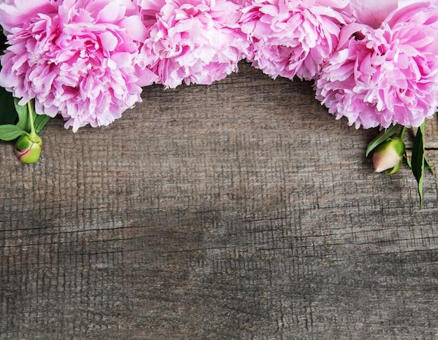 Flores de peonía rosa