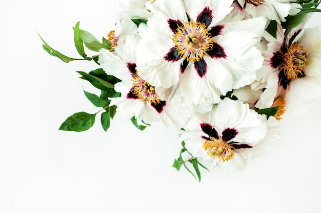 Flores de peonías blancas sobre superficie blanca