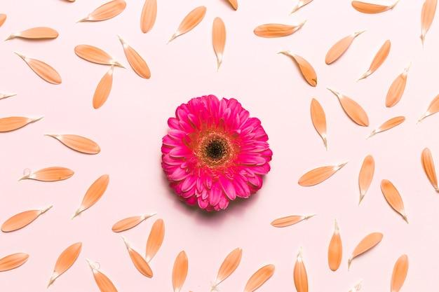 Flores y pétalos