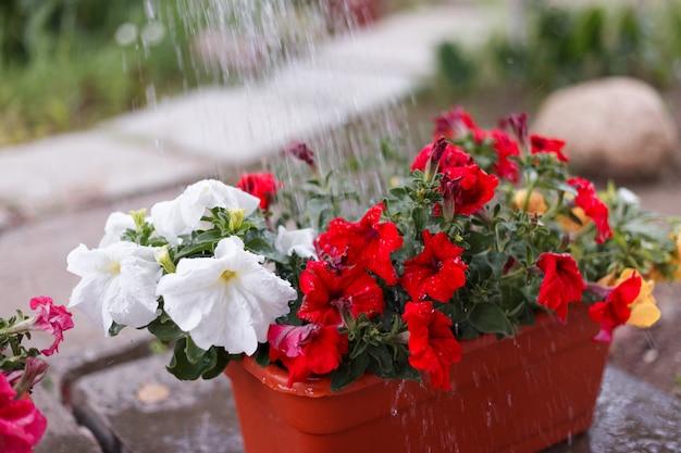 Flores de petunia y crisantemo en jardín