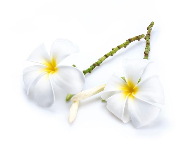 Flores de plumeria suavemente blancas aisladas sobre fondo blanco, fondo blanco aislado de flores de frangipani.