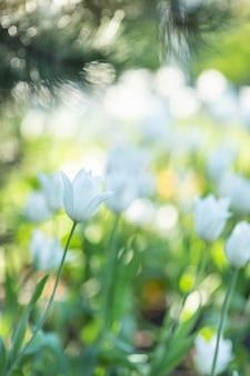 Flores de primavera borrosa.