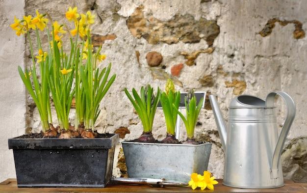 Flores de primavera en macetas rústicas