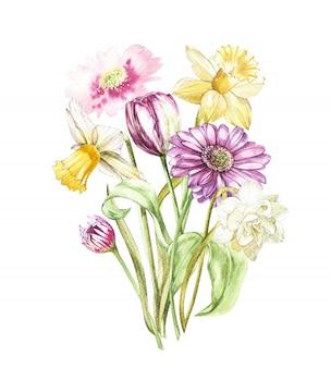 Flores de primavera narcisos y tulipanes, gerbera mirando a los estantes ilustración de dibujado a mano de acuarela.