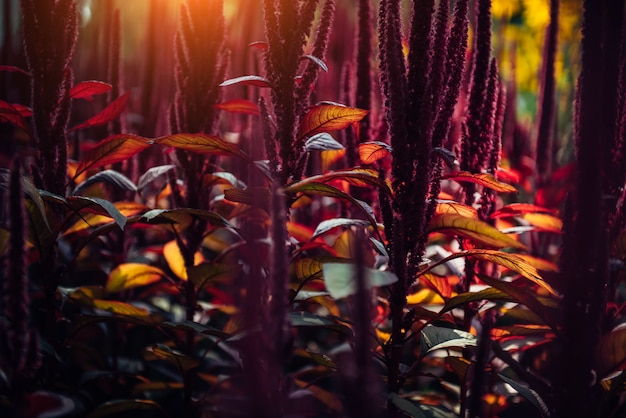 Flores púrpuras y amarillas al aire libre en un jardín