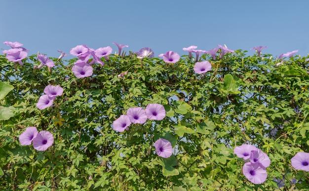 Flores púrpuras bajo cielo azul