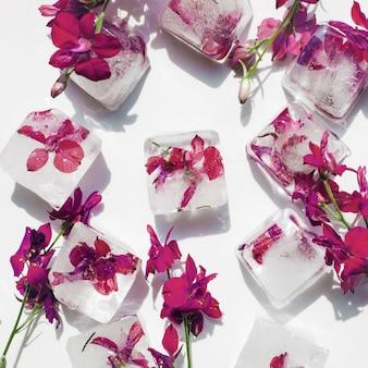 Flores púrpuras en cubos de hielo en el fondo blanco