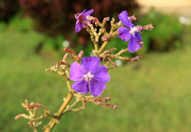 Flores púrpuras con gotas de agua en la isla de pascua, chile, américa del sur