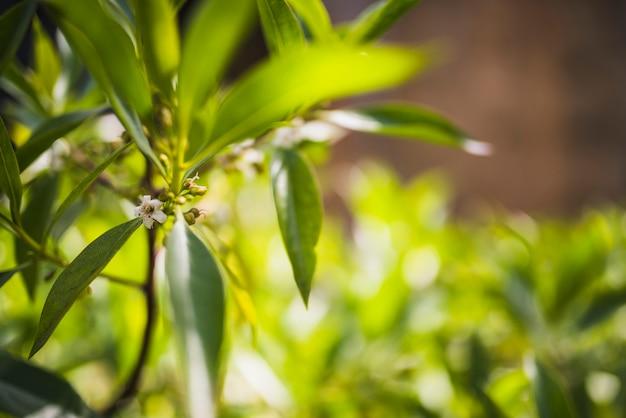 Flores en la rama de un árbol a la luz del sol