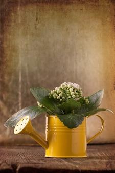 Flores en regadera