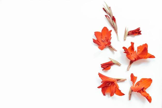 Flores rojas sobre fondo blanco. composición de flores. endecha plana, vista superior, espacio de copia. verano, concepto de otoño.