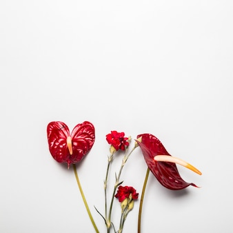 Flores rojas sobre fondo blanco