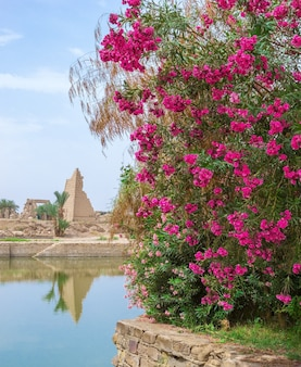 Flores rojas en un templo en luxor, egipto