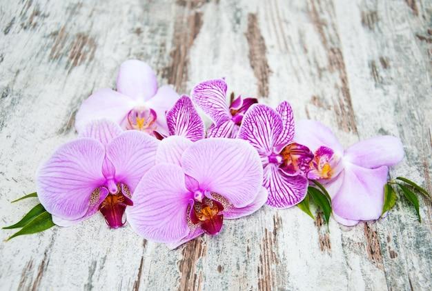 Flores rosa orquideas