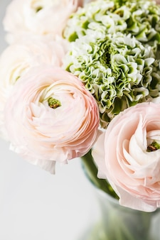 Flores rosadas frescas hermosas del ranúnculo, fondo blanco.