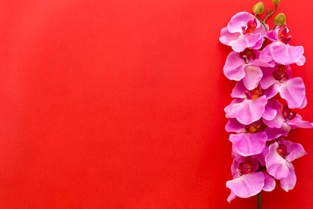 Flores rosadas frescas de la orquídea dispuestas en fondo rojo