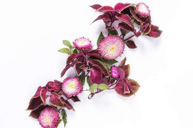 Flores rosadas frescas en superficie blanca