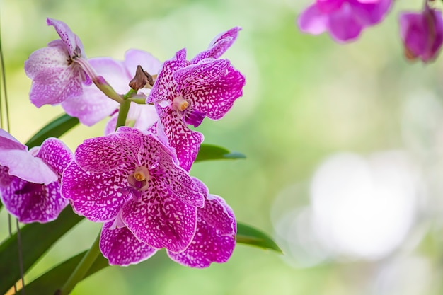 Flores rosadas hermosas en el jardín.