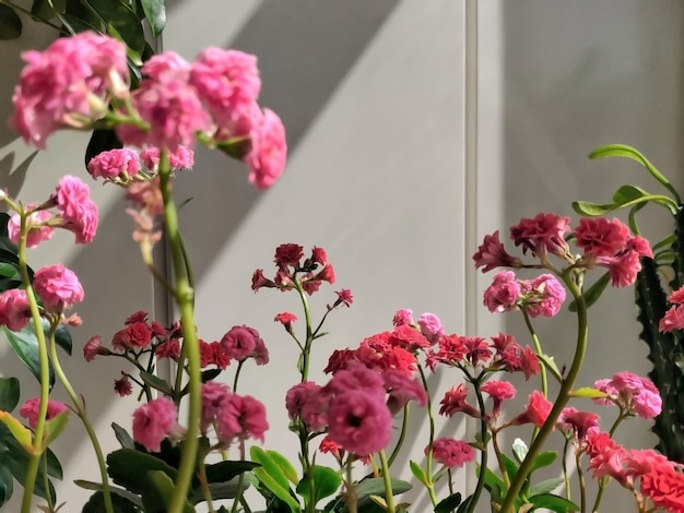 Flores rosadas con hojas verdes, desenfoque de fondo de enfoque selectivo