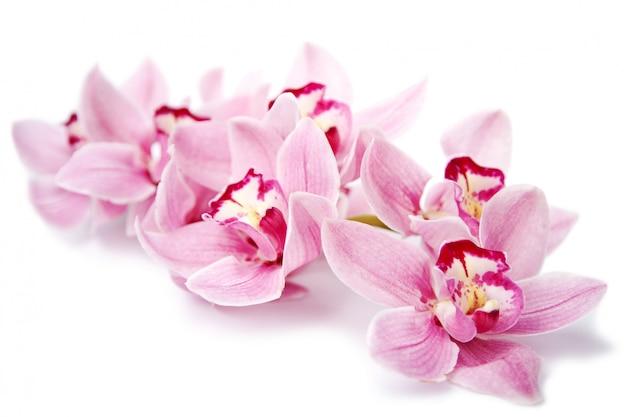 Flores rosadas de la orquídea aisladas en blanco