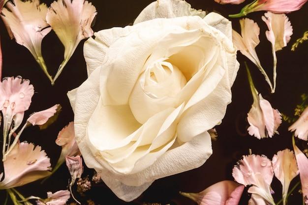 Flores rosadas en primer plano de agua negra
