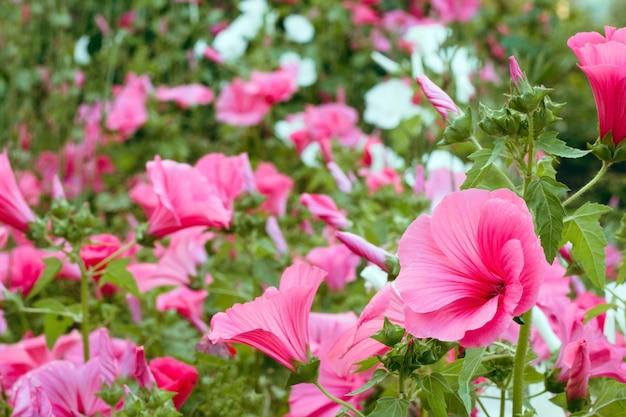 Flores rosadas vibrantes en un jardín