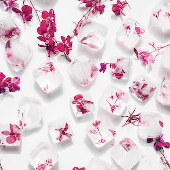 Flores rosas en cubos de hielo.