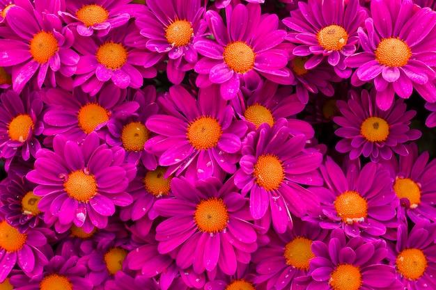 Flores rosas con hermosos pétalos