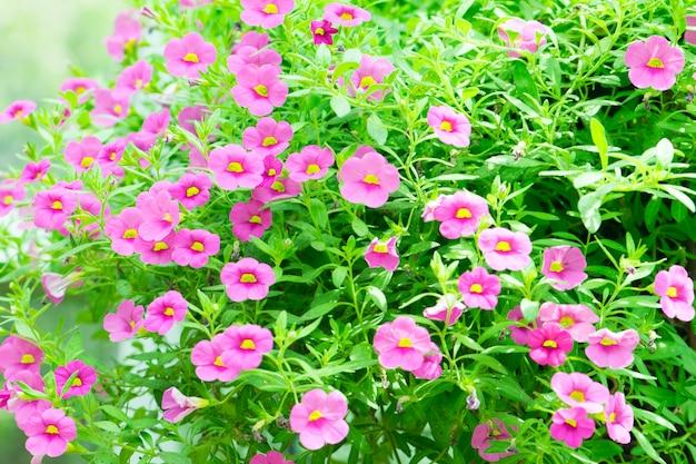 Flores rosas en el jardin