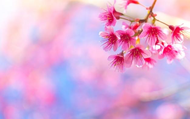 Flores rosas que nacen de una rama de un árbol