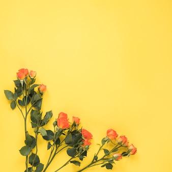 Flores rosas rojas en mesa amarilla