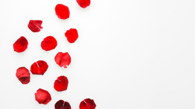 Flores de rosas rojas