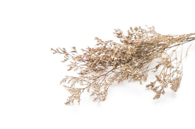 Flores secas de caspia