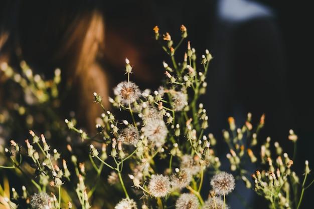 Flores silvestres en el campo