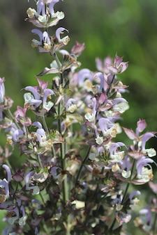 Flores silvestres de color púrpura, hermosas flores de verano en un día soleado