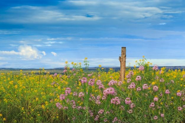 Flores silvestres del desierto y cerca de alambre de púas en arizona