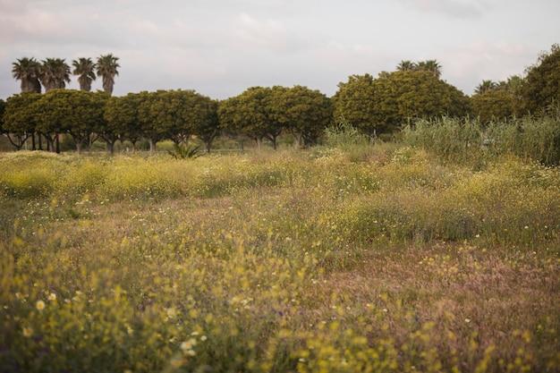 Flores silvestres y paisaje de arbol verde.