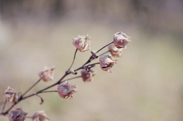 Flores silvestres secas para el fondo