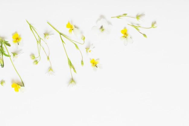 Flores silvestres sobre fondo blanco.